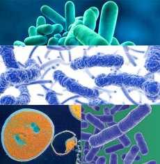 Infekciókontroll az egészségügyben
